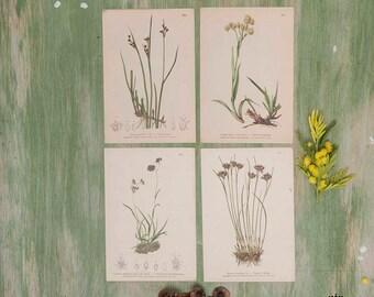 Set di 4 stampe botaniche fiori marroni, giallo, grigio