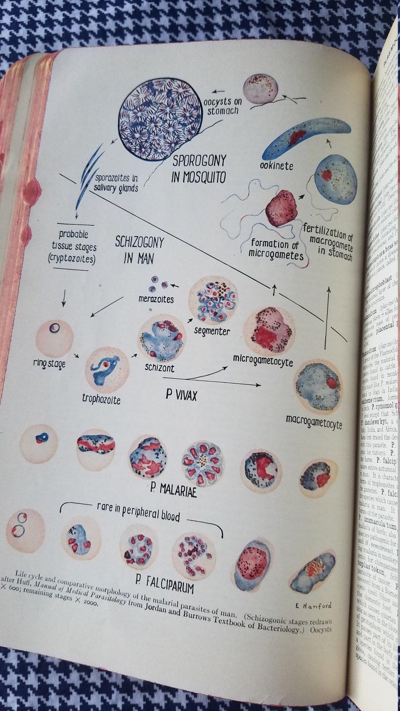 Madison : Morphology medical dictionary
