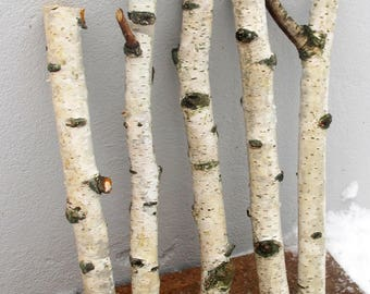 "5 Natural Birch Branches 20 or 25 mm,  Birch Sticks 13.5"", Birch Wood Logs, Natural Decor, Forest Supplies"