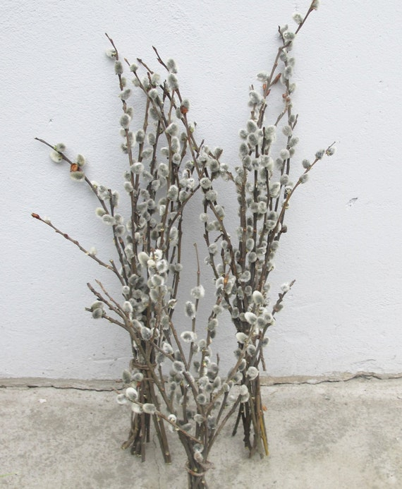 Dried pussy willow branches for sale — img 13