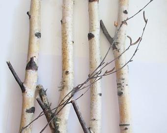 "Set of 4 Birch Branches Sticks 14"", Birch Logs, Natural Decor, Forest Supplies"