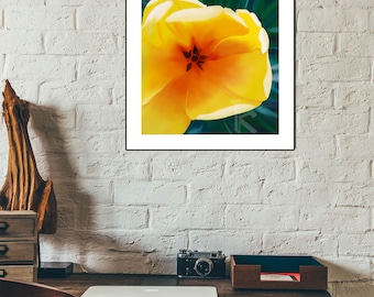 Tulip Digital Painting available as photo Prints or canvas prints, Tulip Wall Art available in various sizes.