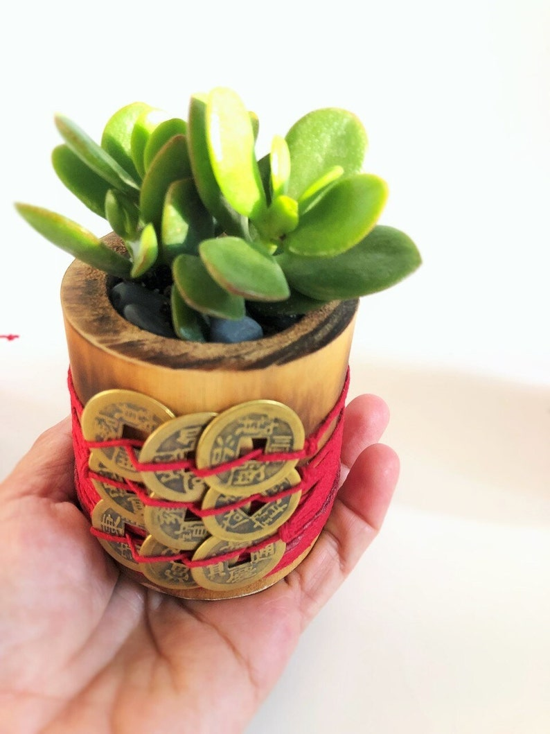 Money Plant with 9 Coins, Feng Shui Plant  Jade Plant, Feng Shui for Money,  Feng Shui Coins, Chinese Coins, Wealth, House warming gift,