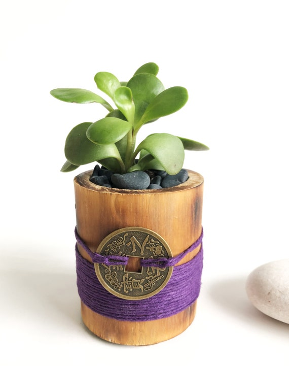 Jade Plant,Money Plant, Feng Shui Plant for Wealth, Feng Shui Decor, Money  Amulet, Plant for Desk, Plant for Gift, House warming Gift,