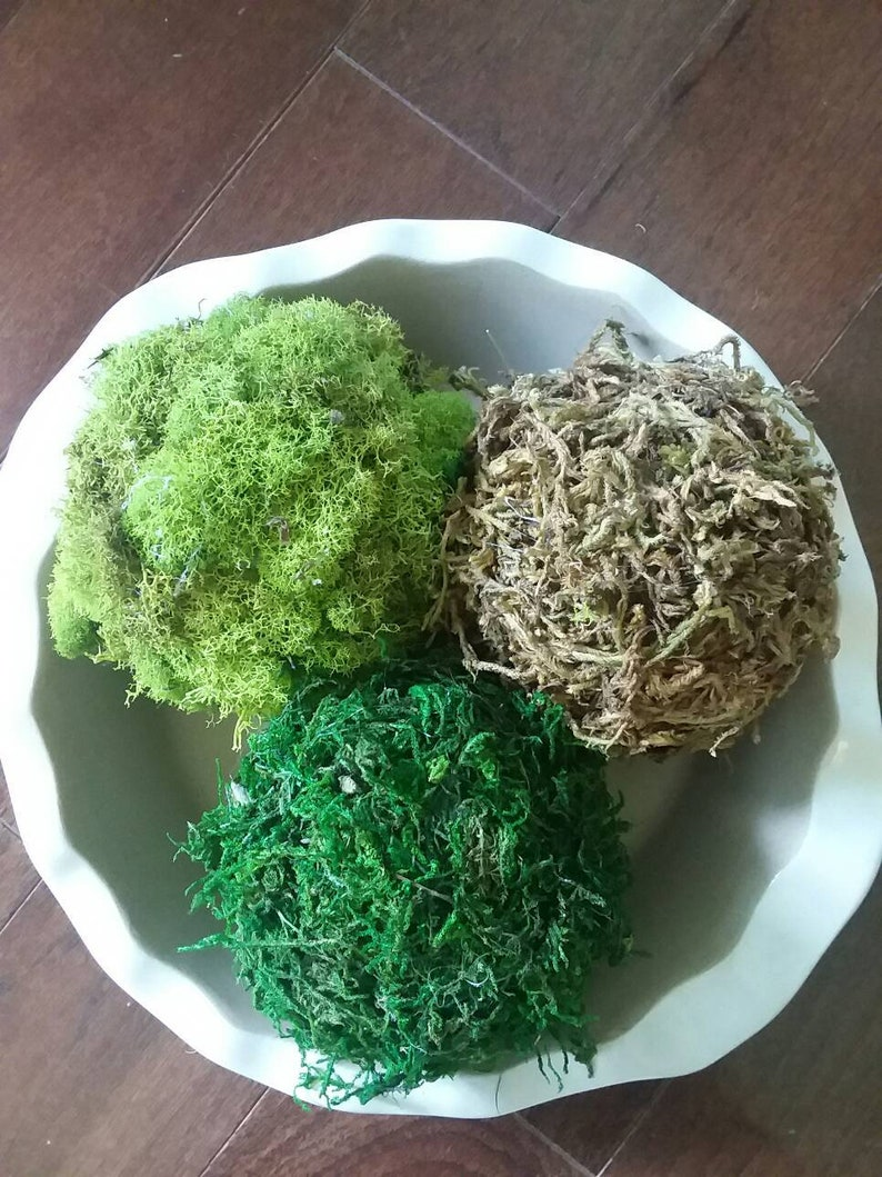 Moss Topiary Balls Topiary Orb Decor Decorative Balls Etsy