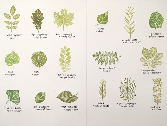Common Tree Leaves Stamp Set Of 17 Specimens Hand Carved