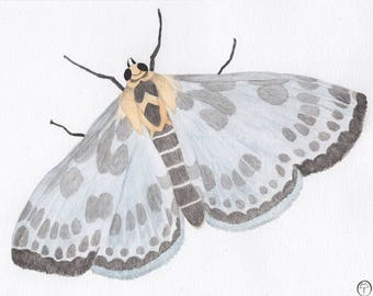 Magpie Moth, watercolor painting, moth painting, moth art, moth print, art print
