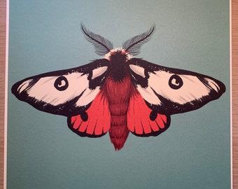 Silk Moth illustration art print