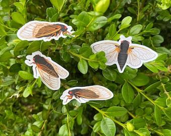 Set of 4 weatherproof cicada stickers, cicada stickers, bullet journal, planner stickers, scrapbooking stickers