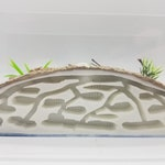 Starter Kit Version MEDIUM Size All in One Expanding Ant Farm Formicarium