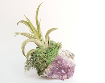 Air Plant Display, Planter Desk Cute, Air Planter, Crystal Air Plant, Air Plant Crystal, Geode Air Plant, Amethyst Air Plant, Office Plant