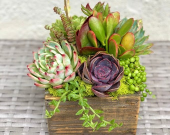 """Live Succulents Planted in a 7"""" Square Wooden Box"""