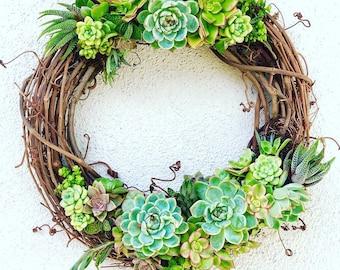 """12"""" Succulent Grapevine Wreath Kit"""