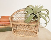 70s Wide Rattan Wicker Peacock Chair Plant Stand Boho Decor