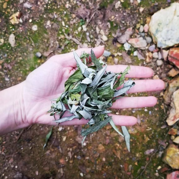 Mugwort  Dreamweed Loose Herb Packet