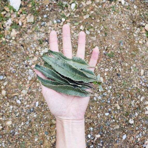 Yerba Santa Loose Herb Packet