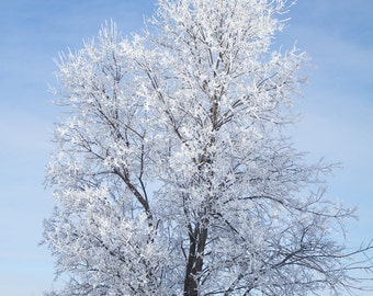 Photo of Tree After Ice Storm, Nature Print