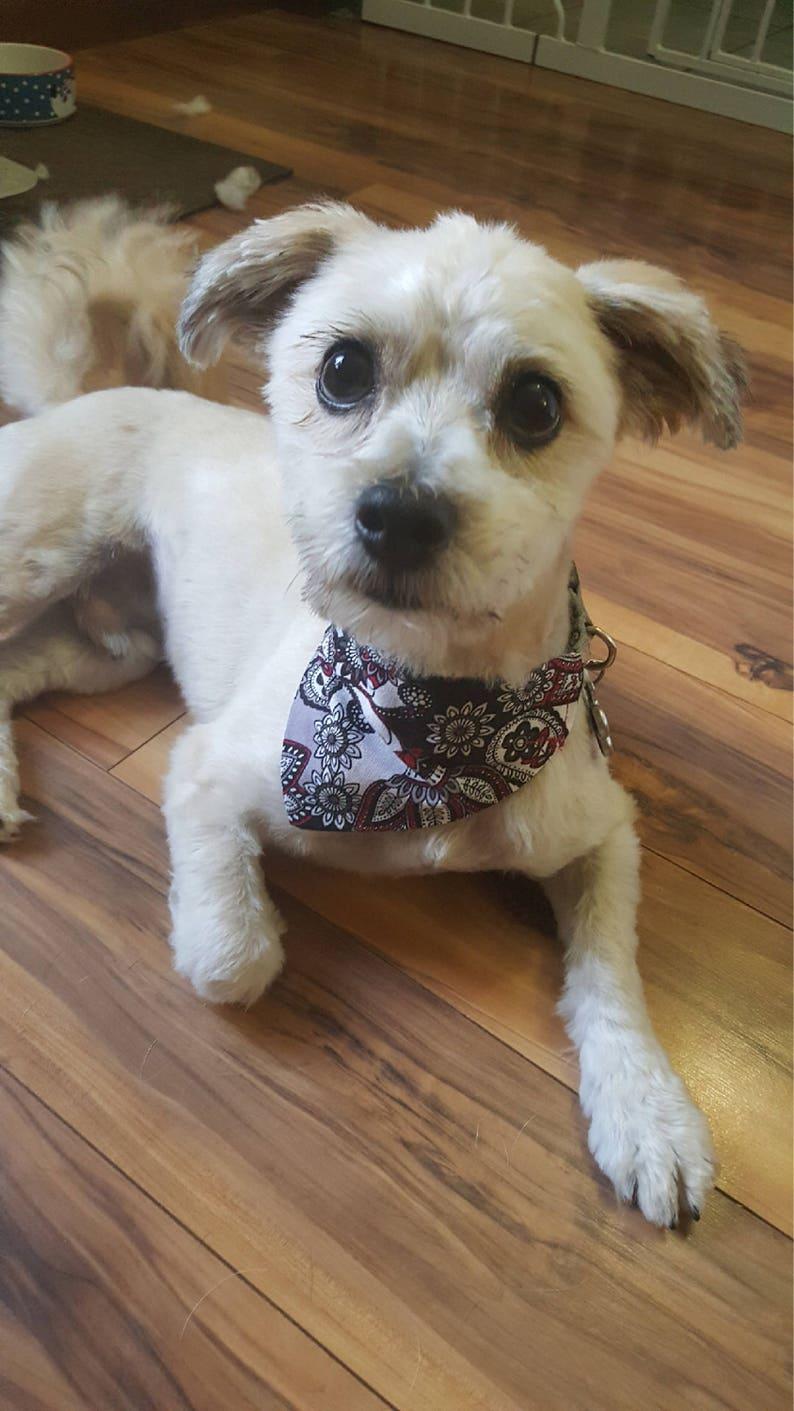 Red Star Lite Over The Collar Dog Bandana