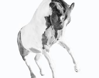 Fine Art Horse Photography, Black and White Horse Photography, Horse Decor, Horse Print, Horse Art, Horse Wall Art, Horse Wall Decor