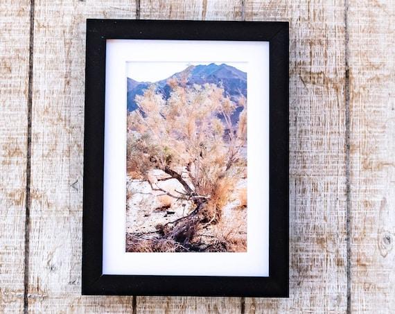 Desert Tree, Color Photo, Wall Decor, White Mat, Black Frame, 5 x 7 Print