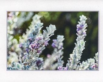 Desert Flowers Color Photograph, Wall Decor, Floral Photography, White Mat,  5 x 7 Photo, 11 x 14 Photo