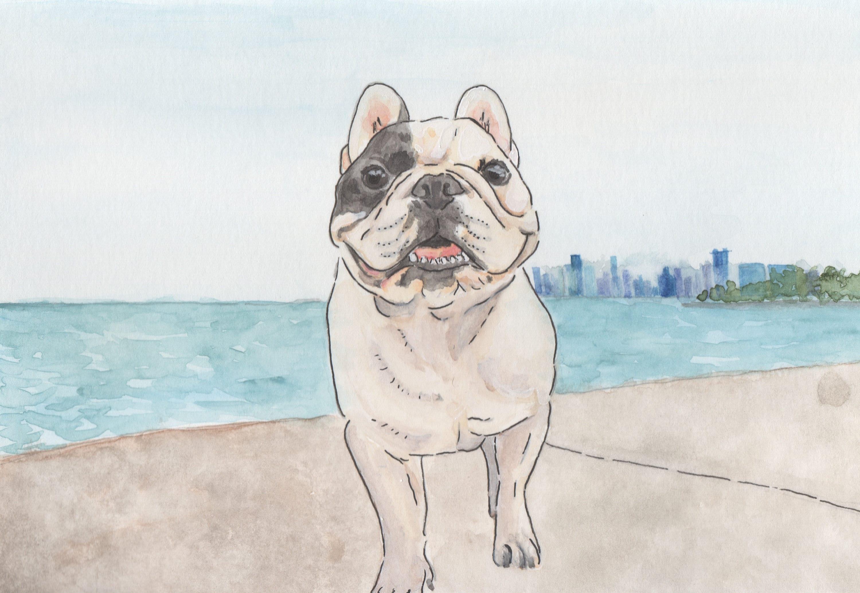 Chicago French Bulldog Rescue Fundraising Artwork