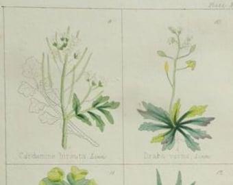 1860 Antique Print, Botany 3