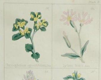 1860 Antique Print, Botany 9