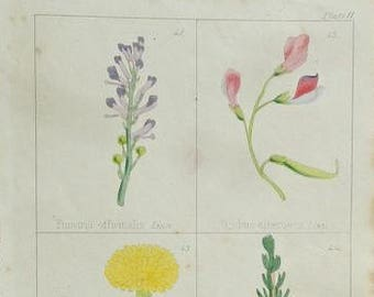 1860 Antique Print, Botany 11