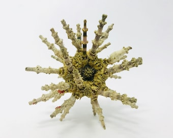 Urchin test Urchin spicy Sea Urchin, sea urchin Sputnik Sea Urchin naturalized, sea urchin shell, seashell, taxidermy cabinet of curiosities