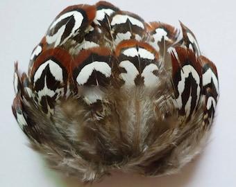 Nissim Tortoiseshell Feathers