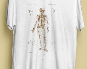 graphic relating to Printable Human Skeleton to Assemble named Human skeleton Etsy