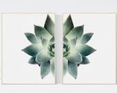 Set of 2 Succulent Wall Art. Botanical Art Print