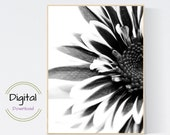 Black and White Flower printable wall art