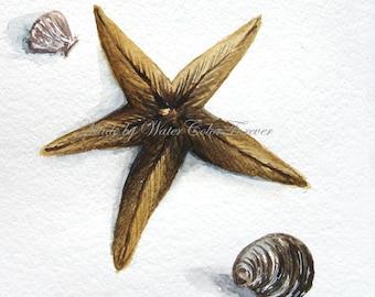 Original watercolor painting, starfish and sea shells, watercolor paintings, starfish painting, nautical style, painting, watercolor art