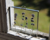Pressed flowers Lavender flower frame / Pressed plants between glass / wall hanging flower frame / Style Provence decor