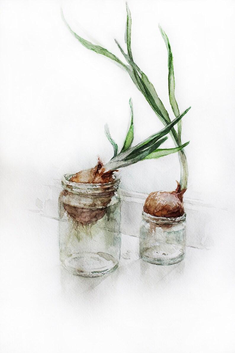 Onion Watercolor Print Rustic Farmhouse Natural Elements Etsy