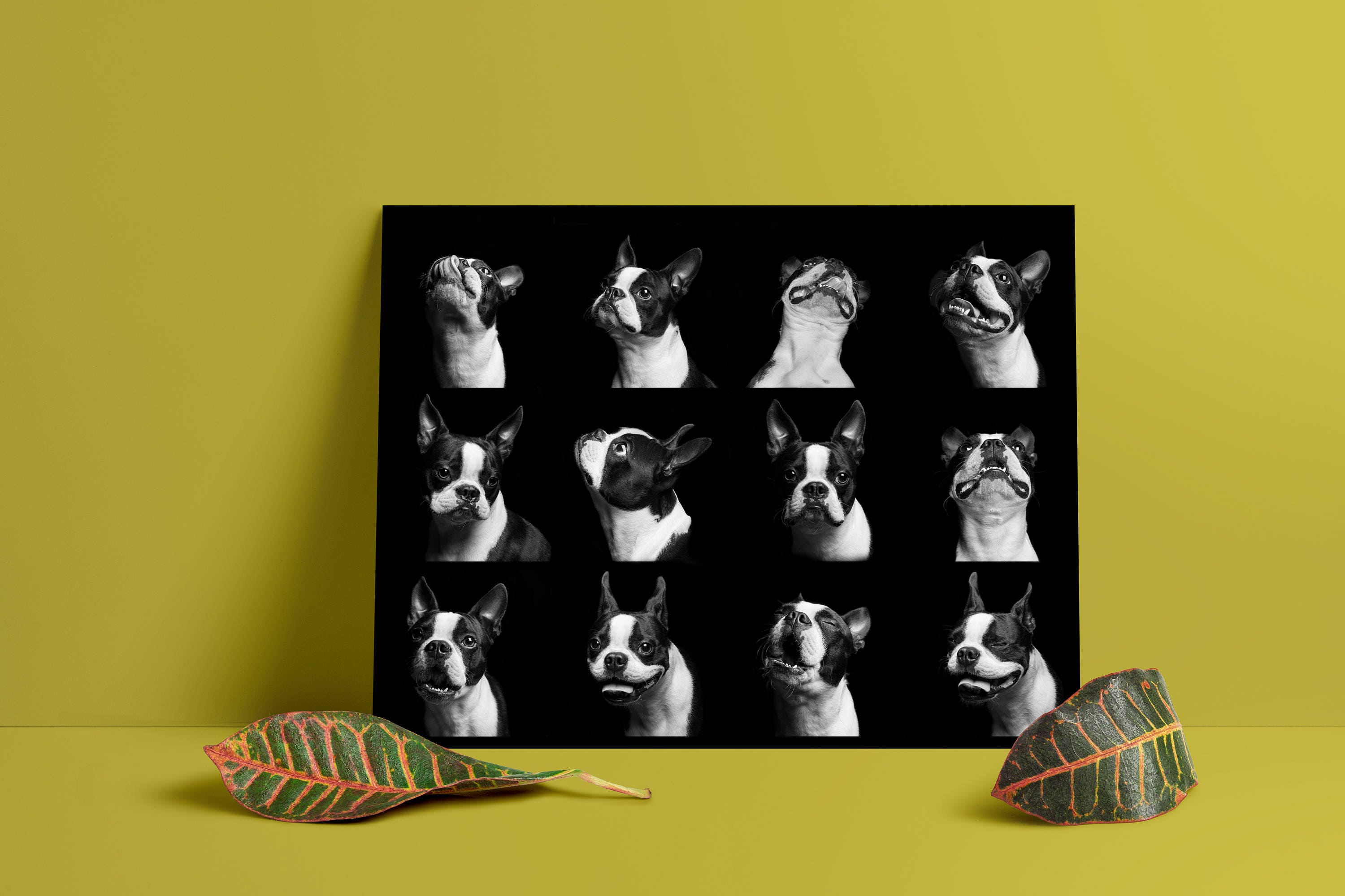 Boston Terrier Pup-emotion poster // wall print | Etsy