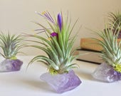 Amethyst Air Plant Crystal, Birthday Gift, Under 20, One of a Kind Gift, Unique Boho Decor, Holiday Gift, Air Plant, Organic