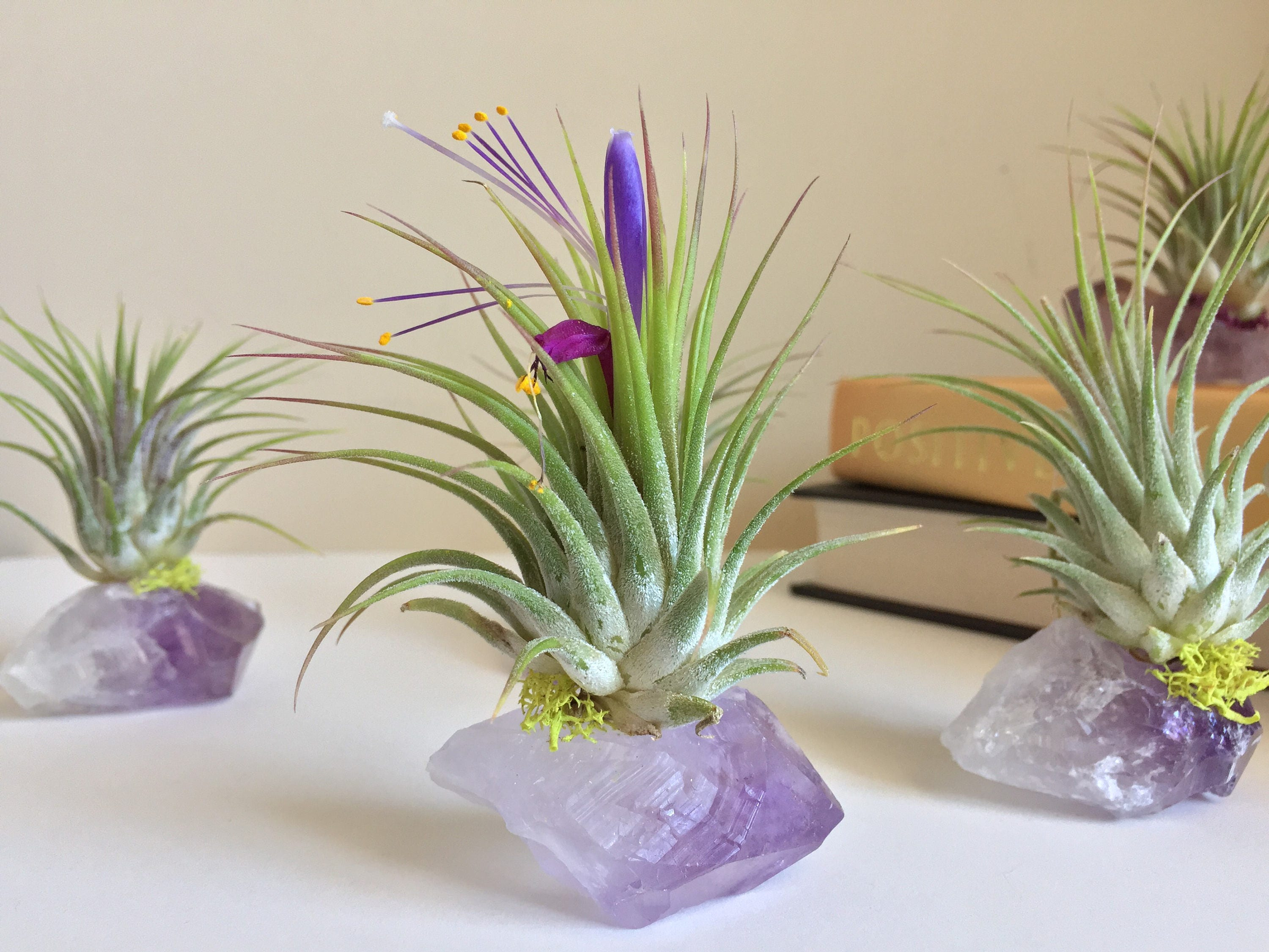 Amethyst Air Plant Crystal Birthday Gift Under 20 One Of A Kind Unique Boho Decor Office