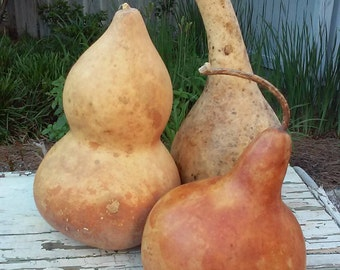 three gourds for crafting