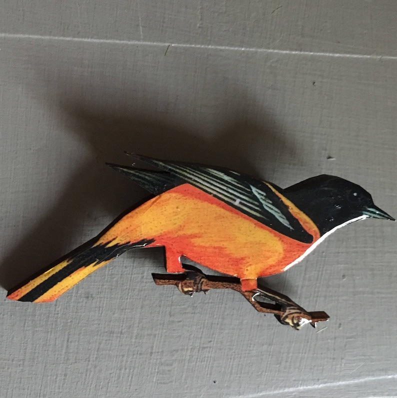 Black Bird With Orange On Wings And Tail 5