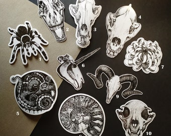 Cabinet of curiosities themed vinyl stickers unit or set skulls fossil tarantula octopus