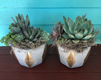 Concrete/Gold Succulent Arrangement