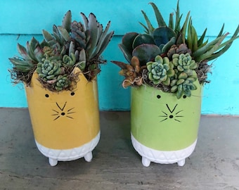 Kitty Kats with succulents