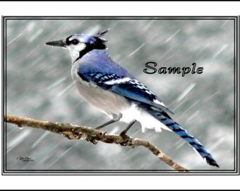 Blue Jay Fine Art Photo Card