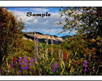 Wild Flower Fine Art Photo Card