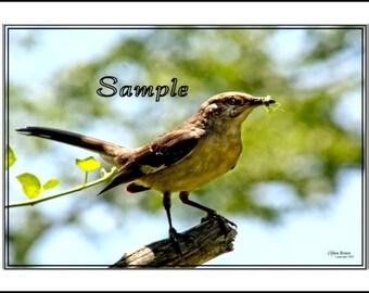 Mocking Bird Fine Art Photo Card