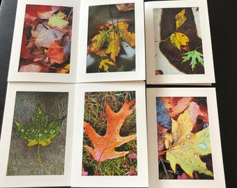Fall leaves! Set of 6 blank cards with envelopes ! Photos taken by me of the fall leaves in Minnesota.