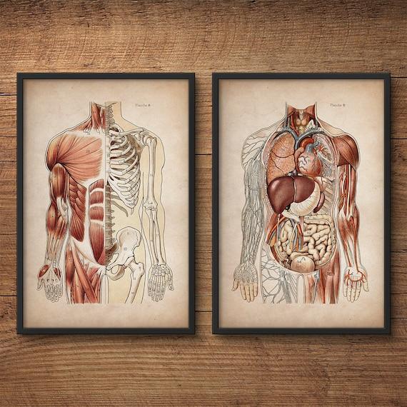 Anatomy Print Set Human Anatomy Posters Anatomy Home Decor Etsy